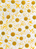 Fresh daisies over yellow background Royalty Free Stock Photography
