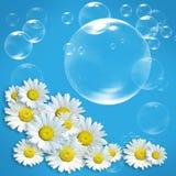 Fresh daisy stock image
