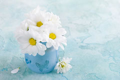 Fresh daisy flowers in blue glass Royalty Free Stock Image
