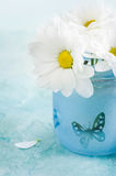 Fresh daisy flowers in blue glass Stock Photography