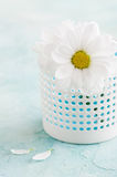 Fresh daisy flowers on pastel blue concrete table Royalty Free Stock Image
