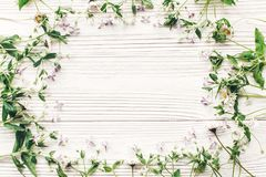 Fresh daisy lilac flowers and green herbs frame on white wooden Royalty Free Stock Images