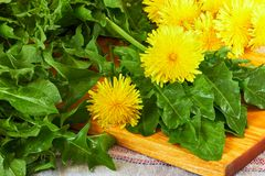 Fresh dandelion leaves with flowers on cutting board royalty free stock photo