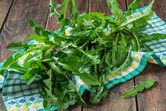 Fresh dandelion leaves for a salad Royalty Free Stock Images