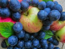 Fresh, dark blue plums and apples scattered on the table royalty free stock photography