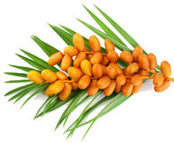 Fresh Date Fruites. A bunch of yellow raw dates with palm leaf on white background Stock Photos