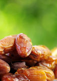 Fresh dates Royalty Free Stock Image