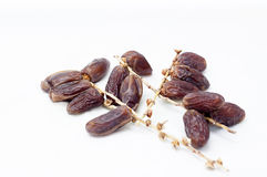 Fresh dates Royalty Free Stock Photos