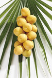 Fresh dates (Phoenix dactylifera) on palm leaf Stock Photo