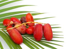 Fresh dates from Saudi Arabia. Red ripe dates on palm leaf over white background Royalty Free Stock Images