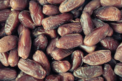 Fresh dates Stock Image