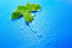 The fresh decision. Green leaf on a dark blue background splashed with water drops Royalty Free Stock Image
