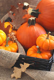 Fresh Decorative Pumpkins. Stock Image