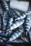 Fresh delicacy fish. On the fish market counter Royalty Free Stock Images