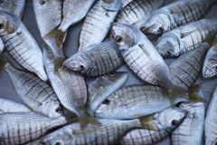 Fresh delicacy fish. On the fish market counter Royalty Free Stock Photography