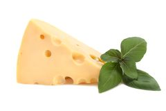 Fresh delicious cheese with basil Royalty Free Stock Photos