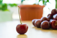 Fresh delicious cherries on the table. Summer harvest. Useful fruit royalty free stock images