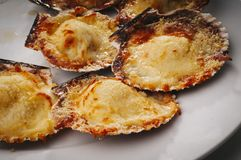 Scallops. Fresh and delicious dish of scallops baked with cheese in its shell stock photo