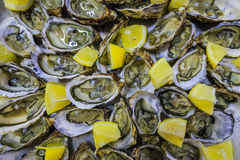 Fresh delicious oysters with lemon. Seafood Royalty Free Stock Images