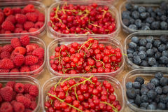Fresh and delicious red currants, raspberries and blueberries Royalty Free Stock Image