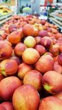 Fresh delicious ripe nectarines royalty free stock photo