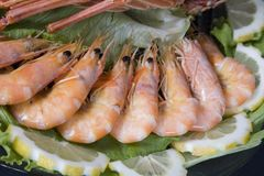 Fresh and delicious seafood - Royalty Free Stock Photography