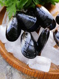 Fresh delicious seafood mussels Stock Photos