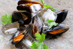 Fresh delicious seafood mussels Stock Photography