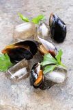 Fresh delicious seafood mussels Royalty Free Stock Photography