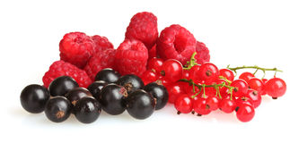 Fresh delicious summer berries isolated Royalty Free Stock Image