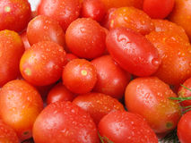 Fresh, delicious and tasty tomatoes and fennel Royalty Free Stock Photo