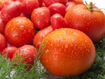 Fresh, delicious and tasty tomatoes and fennel Stock Image