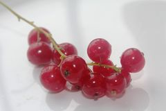 Fresh and delicous red currants Stock Images