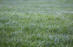 Fresh dew on beautiful young green grass stock photography