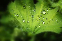 Fresh Dew Drops Stock Image