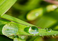Fresh dew drops on a green grass leaf in the morning, Thailand Stock Photo