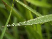 Fresh dew on green grass in the morning royalty free stock images