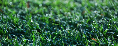 Fresh dew on grass. Fresh dew on the green meadow grass Stock Photos