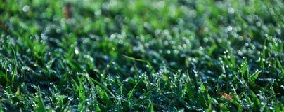 Fresh dew on grass Stock Photos