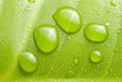 Fresh dews on green leaf Stock Photos