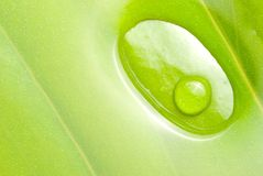 Fresh dews on green leaf Stock Images
