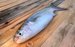 Fresh diamond scaled grey mullet fish. On wooden plate in sunlight Royalty Free Stock Photography