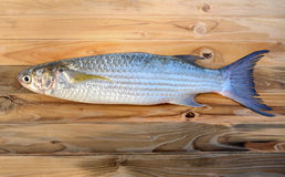Fresh diamond scaled grey mullet fish. On wooden plate in sunlight Royalty Free Stock Photo