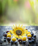 Fresh different berries on a wooden table with sunflower and natural background. Different berries on a wooden table with sunflower and natural background stock images