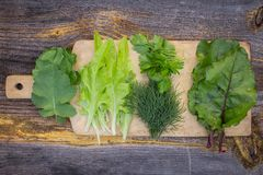 Fresh different green lettuce leaves and greens for salad on a wooden board and table.  Royalty Free Stock Photography