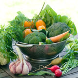 Fresh different vegetables Royalty Free Stock Photo