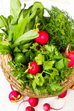 Fresh vegetables - sorrell and radish in a wicker. Fresh tasty sorrel, dill and radish in a wicker basket on white wooden background Royalty Free Stock Photography