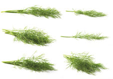 Fresh Dill. (Anethum Graveolens) isolated on white royalty free stock photos