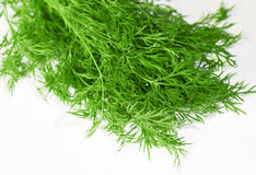 Fresh dill Royalty Free Stock Images