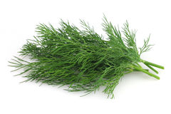 Fresh dill Stock Images